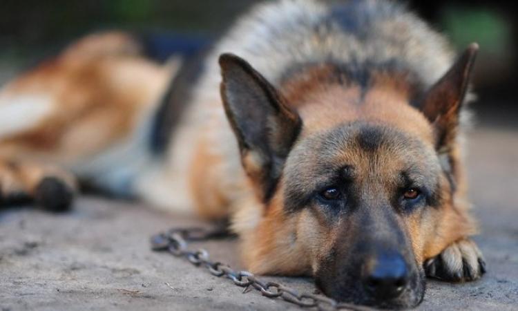 Abbandona il proprio cane: padrone condannato