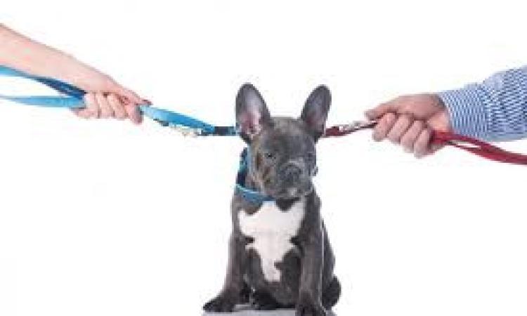 Separazione dei coniugi: chi ha diritto di tenersi il cane o il gatto?