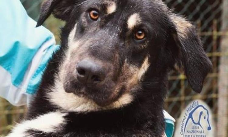Cane smarrito a Macerata: i proprietari chiedono aiuto per ritrovare Siska