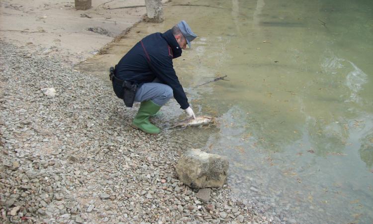 Moria di carpe sul lago Caccamo, arrivano i primi risultati: presente il virus CEV