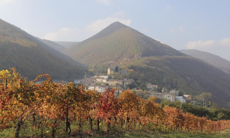 Serrapetrona, Appassimenti aperti: un'ottima vendemmia dà il benvenuto alla tredicesima edizione (FOTO)