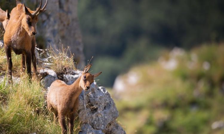 Il Parco Nazionale dei Monti Sibillini si racconta: in programma due importanti iniziative