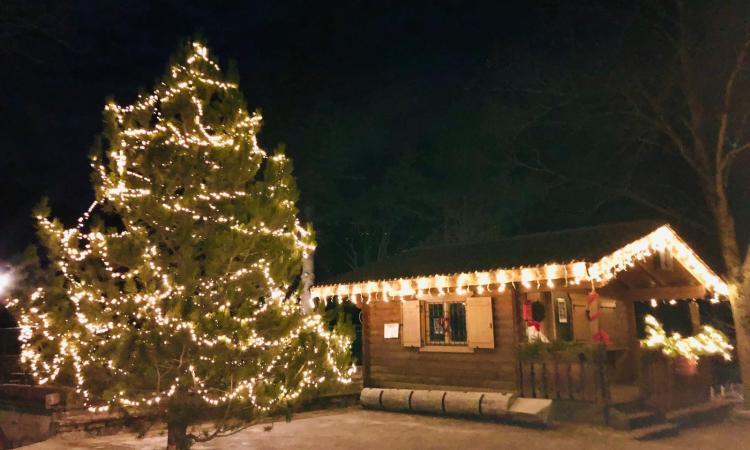 Bolognola, 4720 luci led per l'albero più in alto delle Marche: domani l'accensione