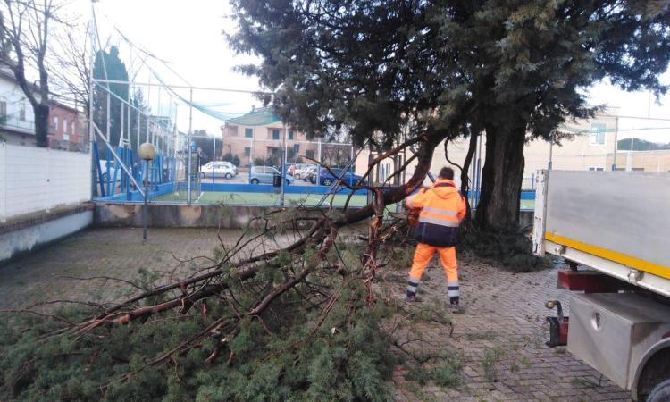 """Chiesanuova, raffiche di vento nella notte: grosso ramo si abbatte davanti al portone della scuola """"Paladini"""""""