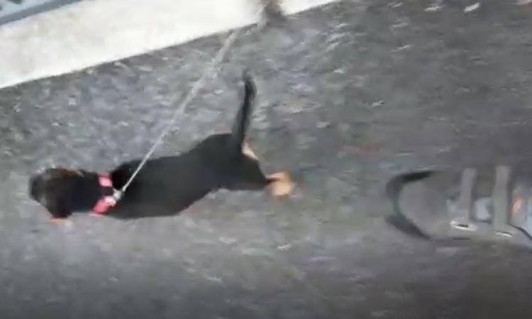 Pollenza, scende in strada per riprendere un flash mob musicale che durava da giorni e viene aggredito (VIDEO)
