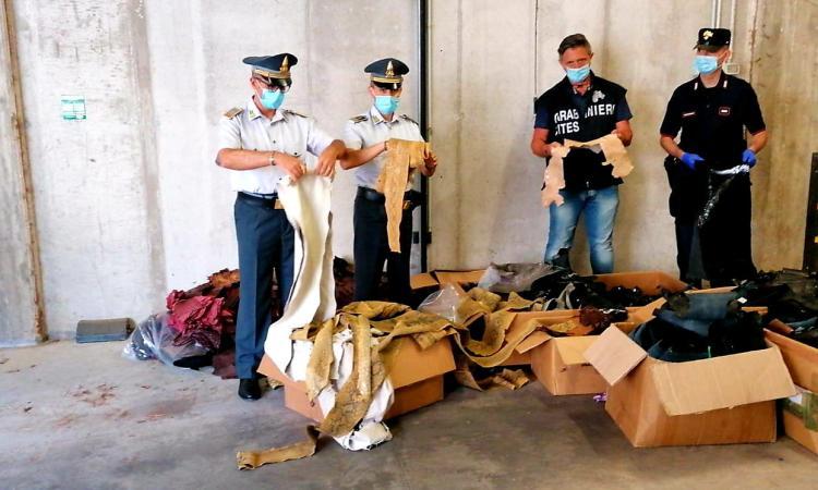 Morrovalle, blitz in una nota azienda, sequestrati 236 kg di pelli di animali protetti: denunciato titolare (VIDEO e FOTO)