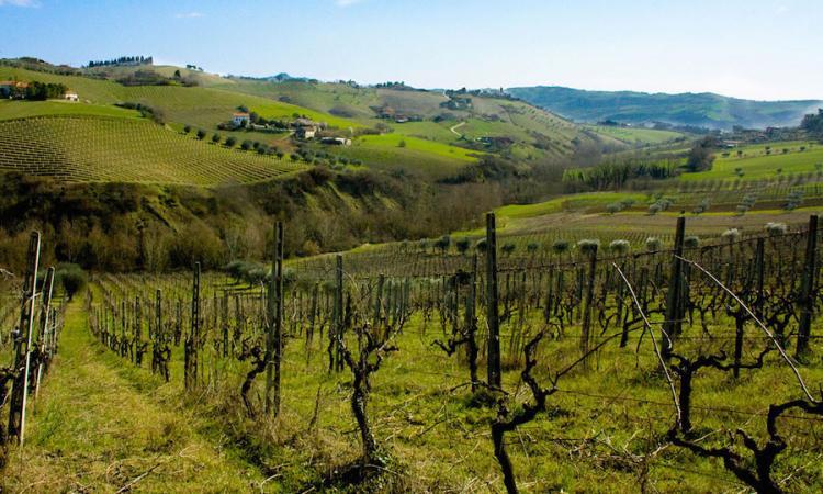 Macerata, rinnovato il contratto provinciale: aumento del salario per oltre 5000 operai agricoli