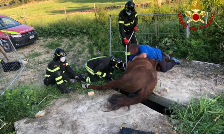 Resta con la zampa incastrata tra due lastre di calcestruzzo: cavallo liberato dai vigili del fuoco
