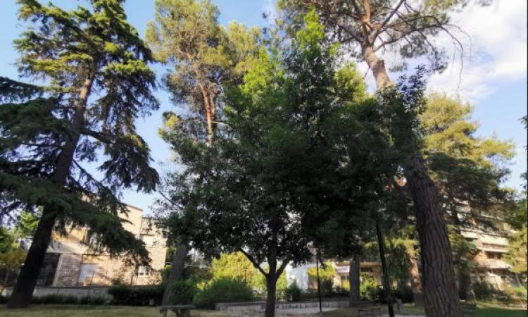 """Tolentino, """"No all'abbattimento degli alberi dei giardini Lennon"""": i cittadini scrivono al Comune"""